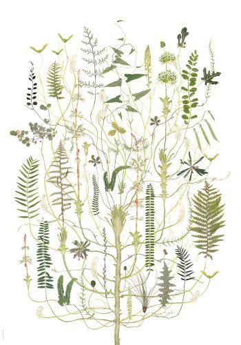'Herbarios imaginados. Entre el arte y la ciencia' Lotta Olsson   Green Flora (Grön Flora) S/F   Tintas pigmentadas sobre papel de algodón. 100 x 70 cm